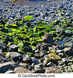 Stones as Backgraund - Stones Covered with Moss near the...
