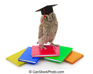 owl in academic cap on a white background