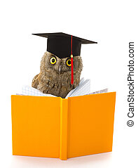 owl in academic cap and yellow book on a white background