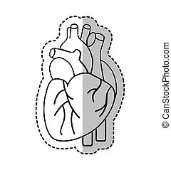 heart human organ icon