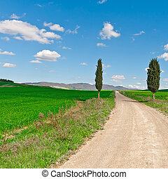 Cypress - Dirt Road with Cypress Leading to the Farmhouse in...