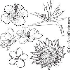 Tropical flowers - hibiscus, protea, plumeria, bird of...