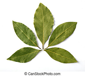 Bay leaf isolated on white background. Macro. with clipping...