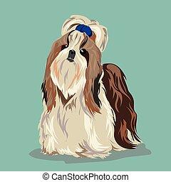 Shih Tzu dog - Shih tzu poses on a white background