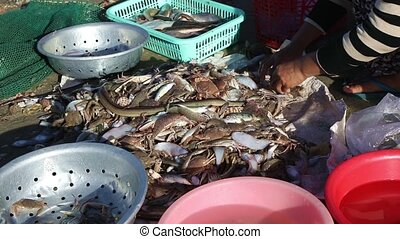 Vietnamese fishermen taking out the catch - The wife of a...