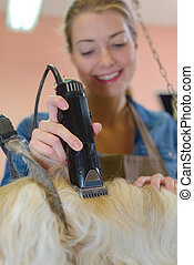 Pet groomer using clippers