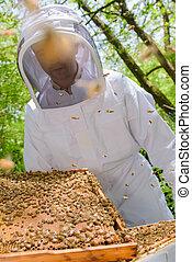 apicultor, cosecha, rico
