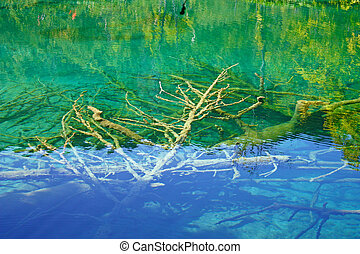 Submerged branches in deep cold water