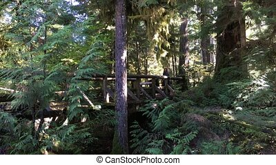 Girl Tourist walking on foot bridge Sahalie Falls Trail...