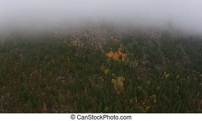 Aerial over thick morning mountain fog Oregon Landscape Fall...