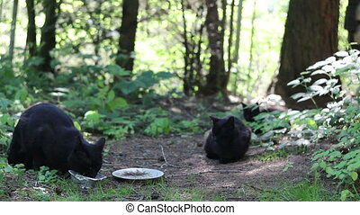 black stray cats - close-up eating black stray cats at...