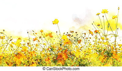 yellow cosmos flower watercolor effect on the white...
