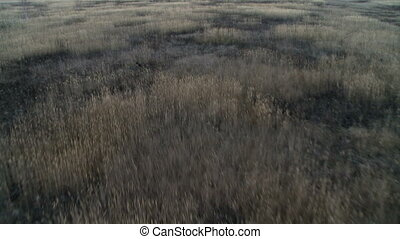 Field landscape aerial shot. - Field and forest landscape...