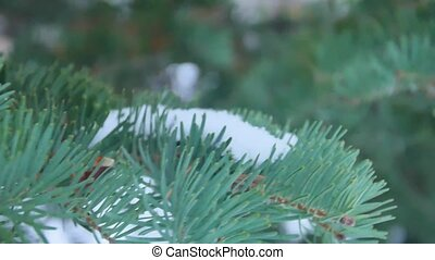 Fir branches covered with hoar frost shoot in RAW, slide...