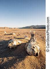Dead suffocated fish skeleton lying on a dried out lake bed