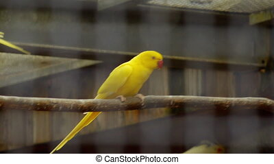 parrots in a cage play