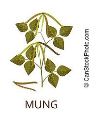 Mung plant with leaves and pods. Vector illustration