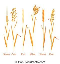 Planter, kilder,  Illustration, farverig, Sæt, Vektor, Kornsorter, Kulhydrater