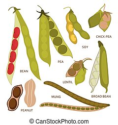 Legumes pods set in flat style. Vector illustration.