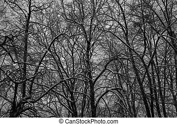 Thick dark forest, black trees. Background texture of tree trunks