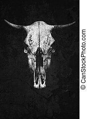 Skull of a cow or a bull isolated on a black background