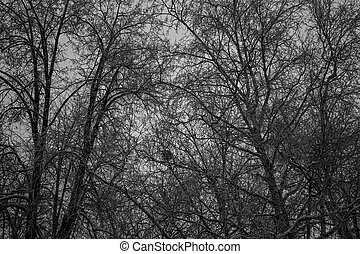 the middle of the woods. the great dark trees. The dark background of the texture of the trees. black forest. Bird's nest