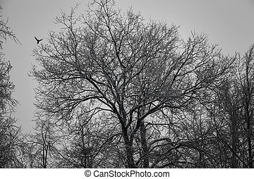 The silhouette of a large oak in the forest, the flight of a bird. Twilight in the woods on the nature.