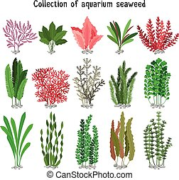 Seaweed set vector illustration. Yellow and brown, red green...