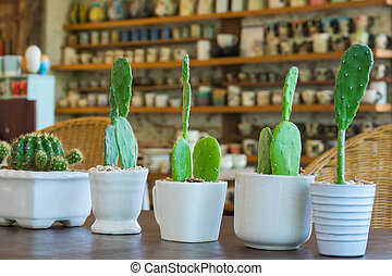 cactus - Green cactus in the white pot place on wooden table...