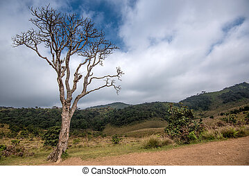 Lonely dry tree in Horton Plains - Scenic view with lonely...