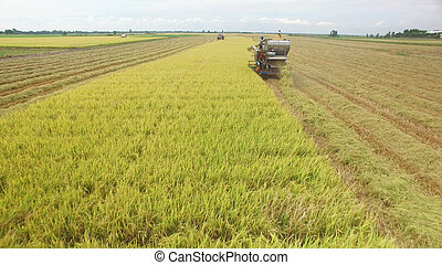 Aerial view of combine on harvest field in Ayutthaya, Thailand