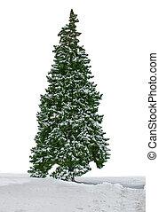 abeto, árbol, aislado, nevoso