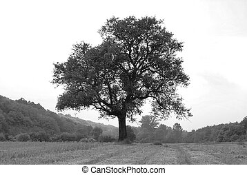 Lonely tree on meadow