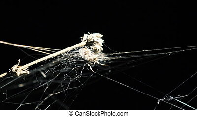 Alight spider web with dead plant on the dark background in...