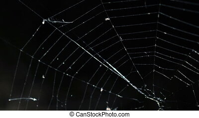 Alight spider web on the dark background