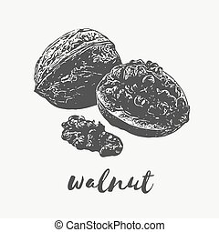 walnut Organic Food - walnut healthy organic food rich in...