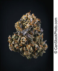Single cannabis bud (berry noir strain) isolated on black -...
