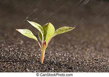 Plant - A young green plant with water on it growing out of...