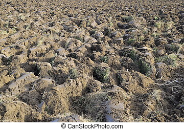 Plowed soil in the garden. Treatment of the soil in the...