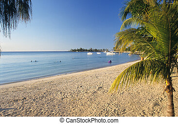 Palm tree and beach Mauritius Island - Palm tree and beach...