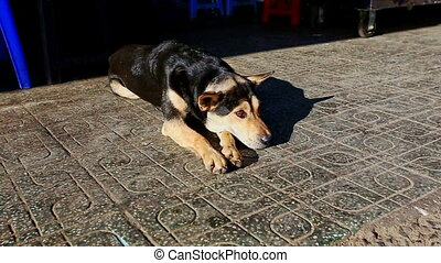Sheep-dog Rests on Street Pavement under Bright Sunlight -...