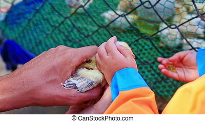 Little Girl Tries to Feed Chicken from Hand Fears at Farm -...
