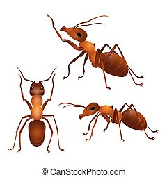 Set of ants with two antennas and six legs in different...