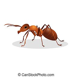 Brown ant isolated on white. Insect icon. Termite. Eusocial...