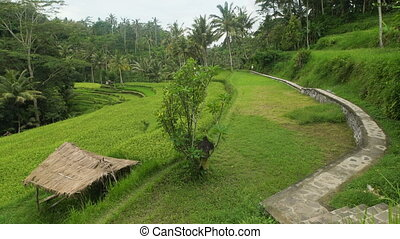 Level green hill surrounded by tropical jungle. Stone paved pedestrian path along the rainforest. Small hut with a thatched roof.
