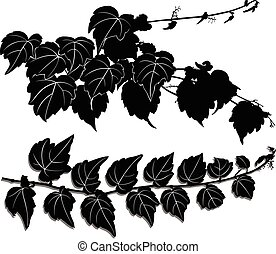 a sprig of of ivy
