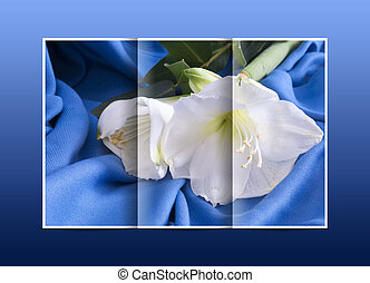 brochure white flower amarillo on a blue background