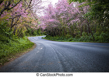 pink cherry blossom flowers blooming in winter season...