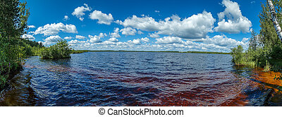 Forest lake on a hot summer day