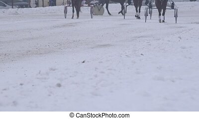 Race horse legs with riders in wheel carts warm up on snowy track in winter. 4K